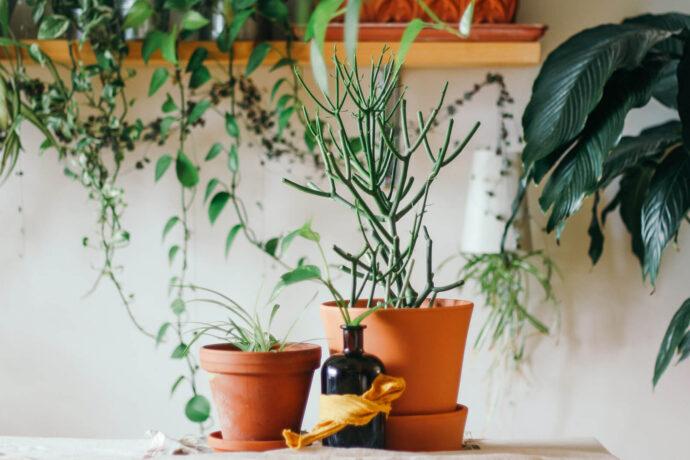 گیاهانی که برای شما خوششانسی میآورند!